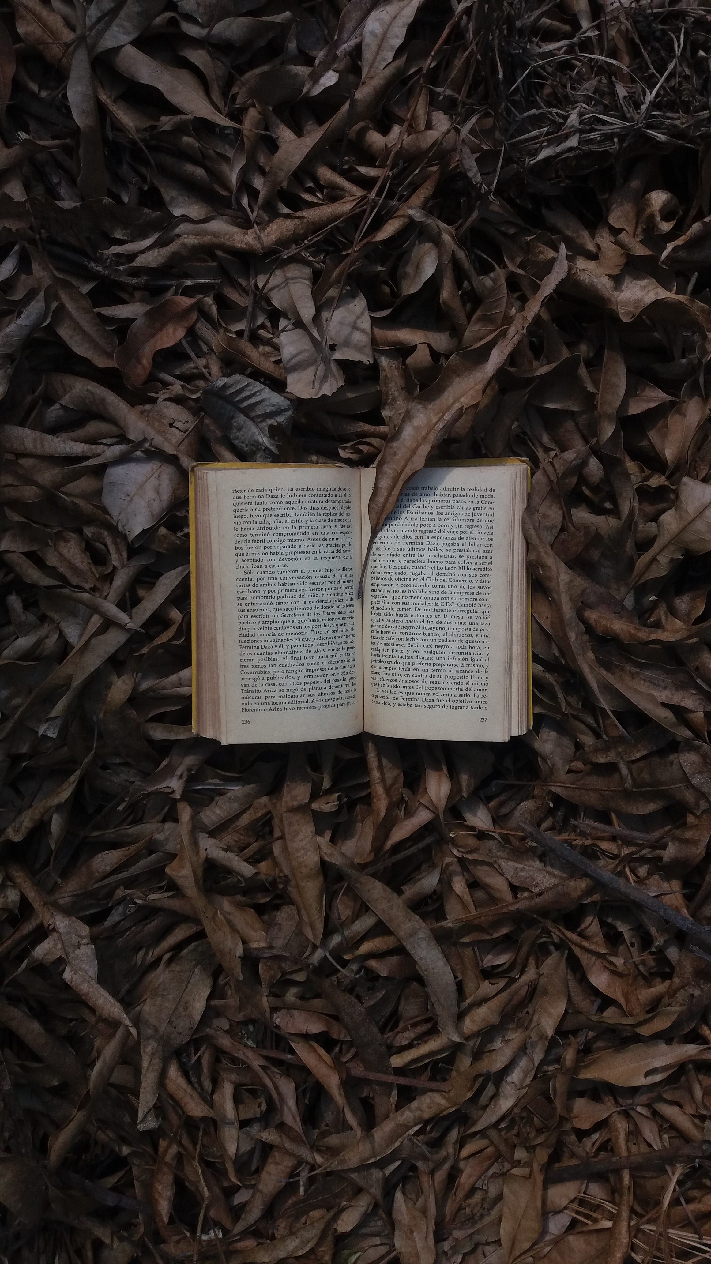 book open on dried leaves top-view photography