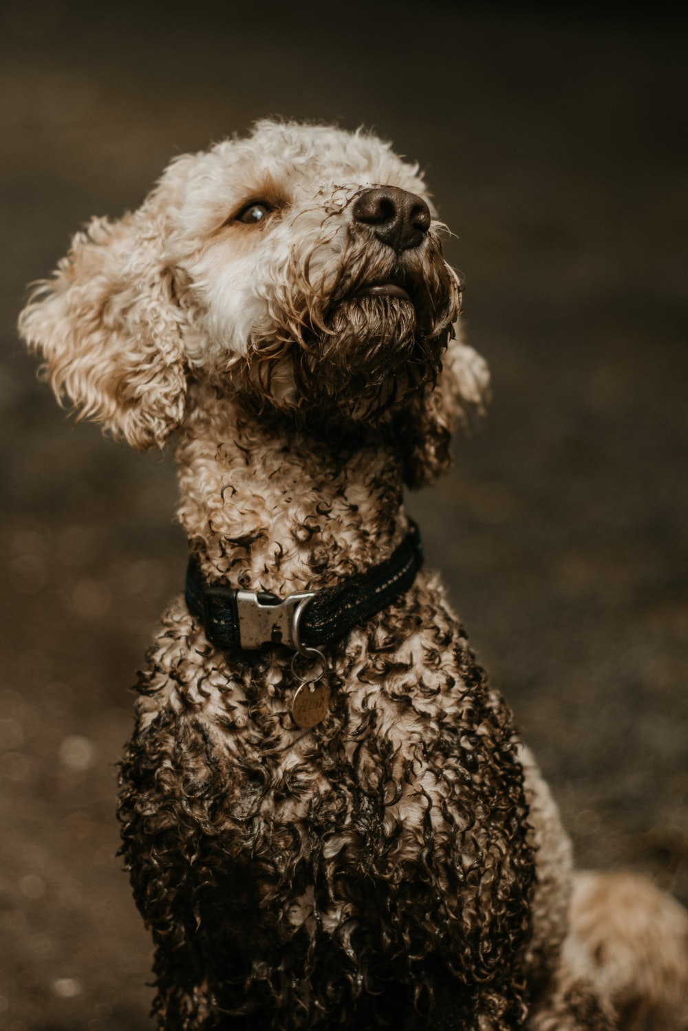 Dirty Dog Pictures Download Free Images On Unsplash