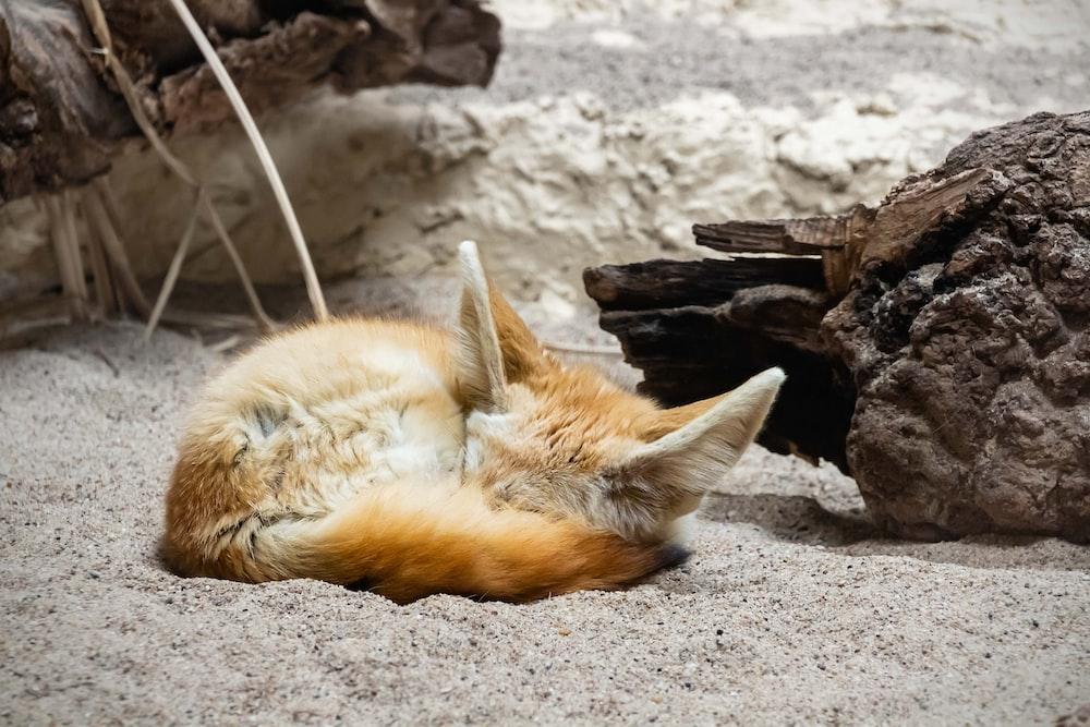 orange kitten on gray sand