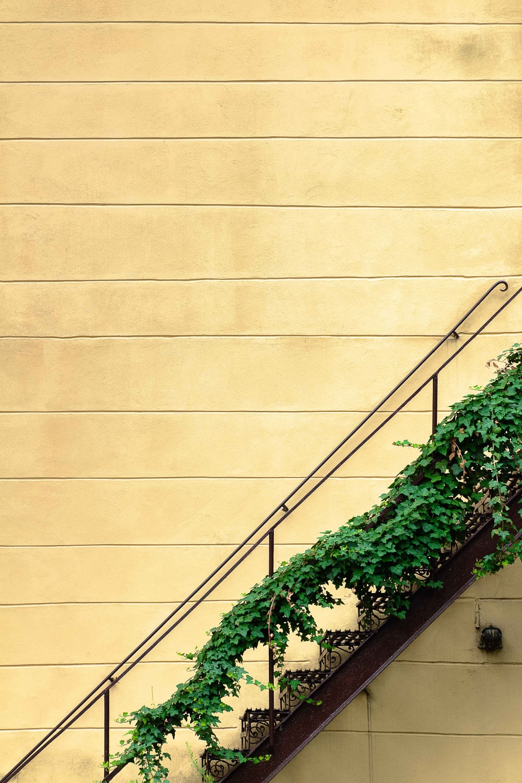 green grass on black steel stair