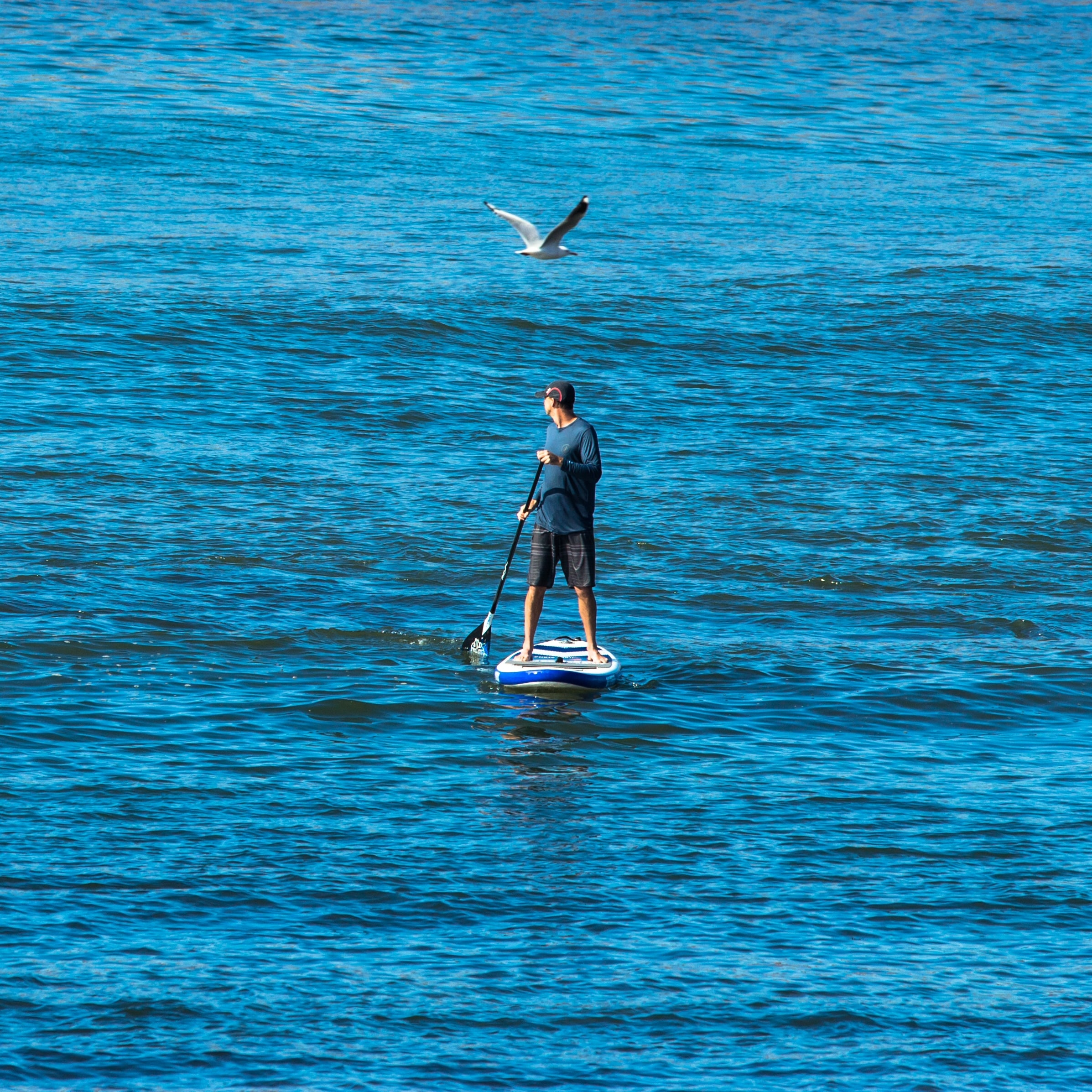 person standing on blue and white paddle board floating on sea at daytime