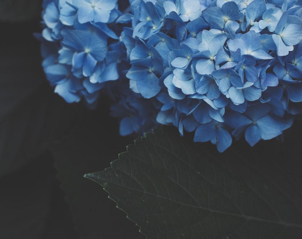 blue flowers plant