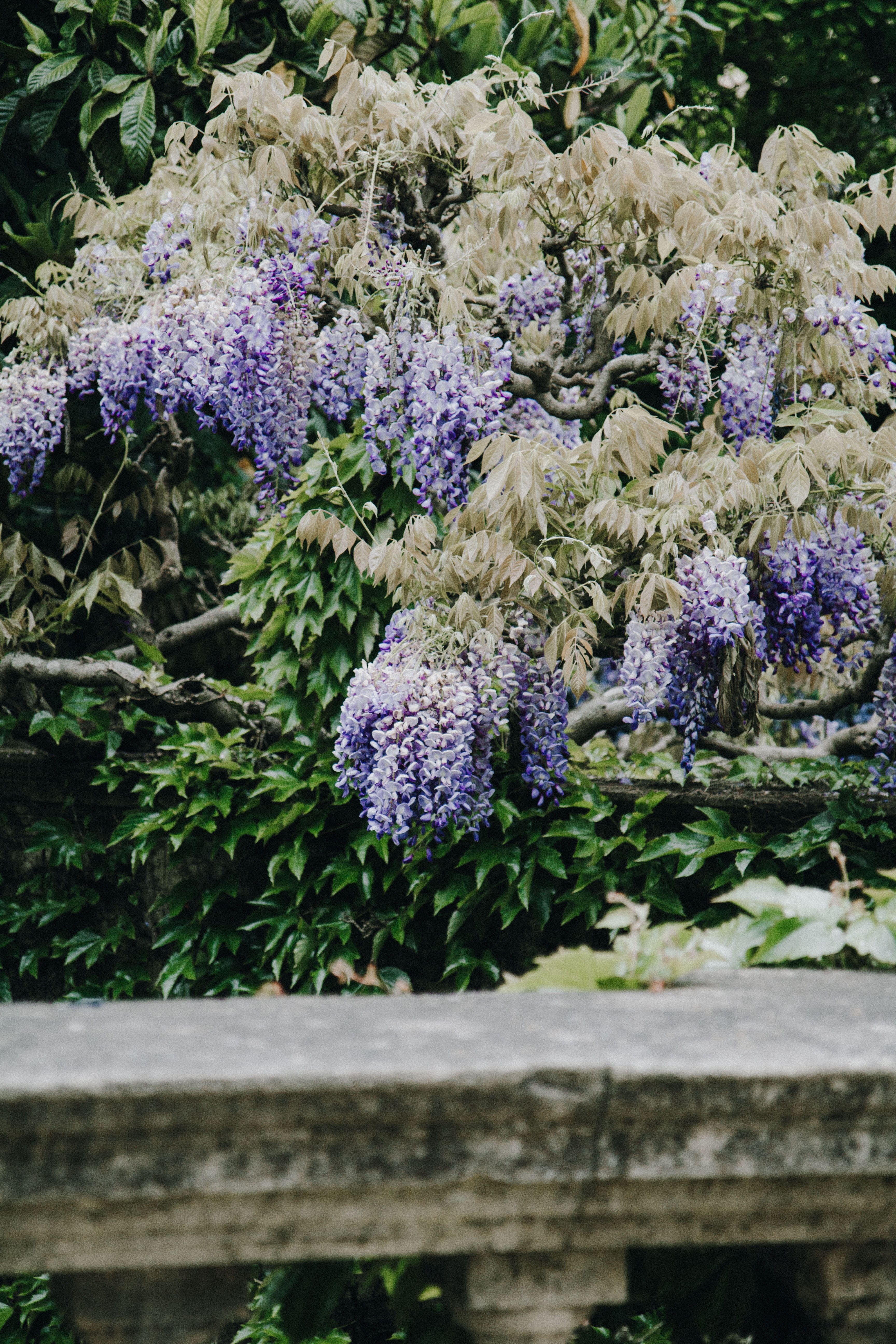 photo of white and purple flowers