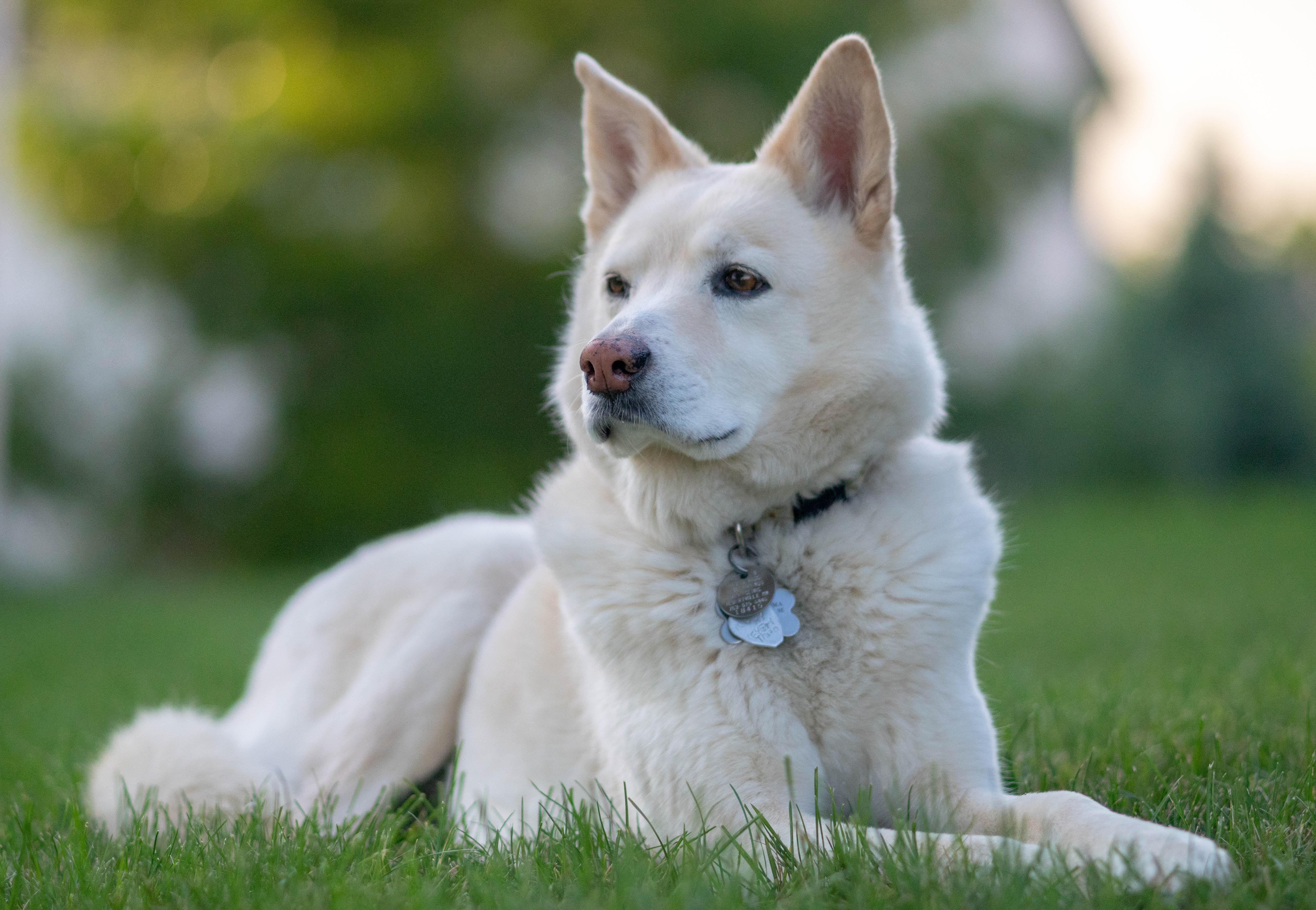 dog sitting on lawn grass