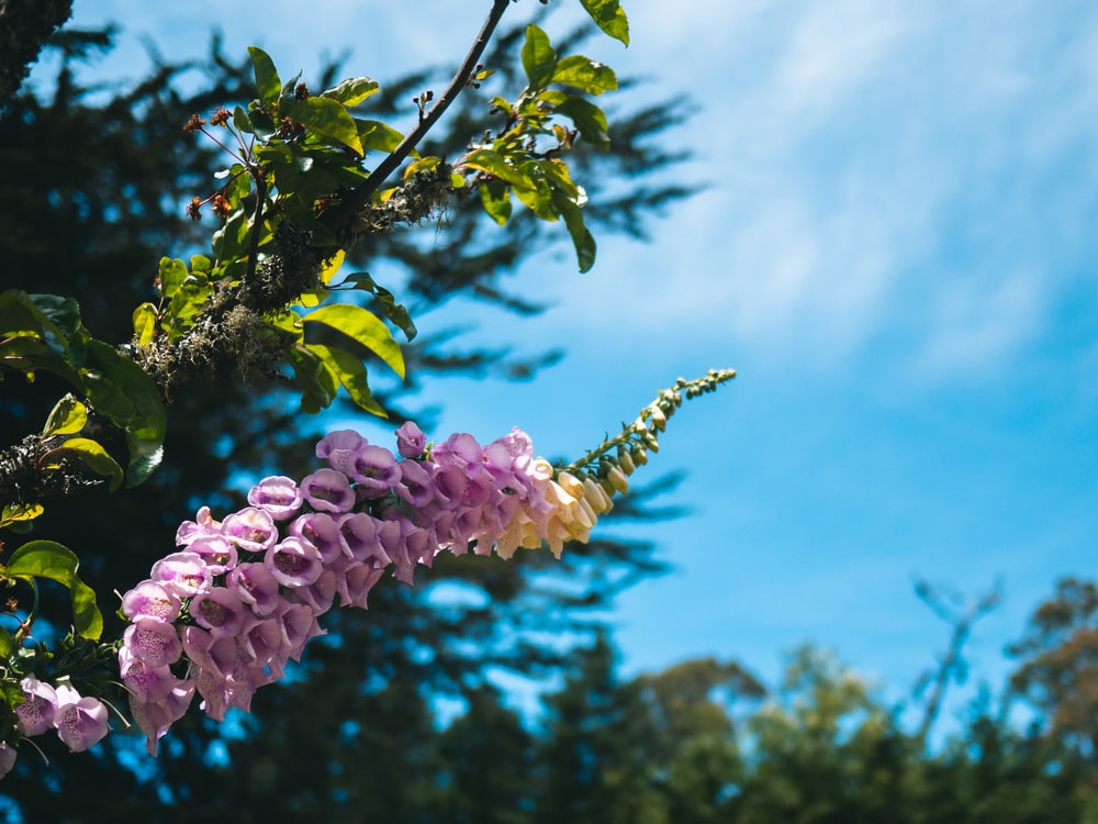 Purple flower pictures download free images on unsplash pink and yellow flower bloom at daytime mightylinksfo