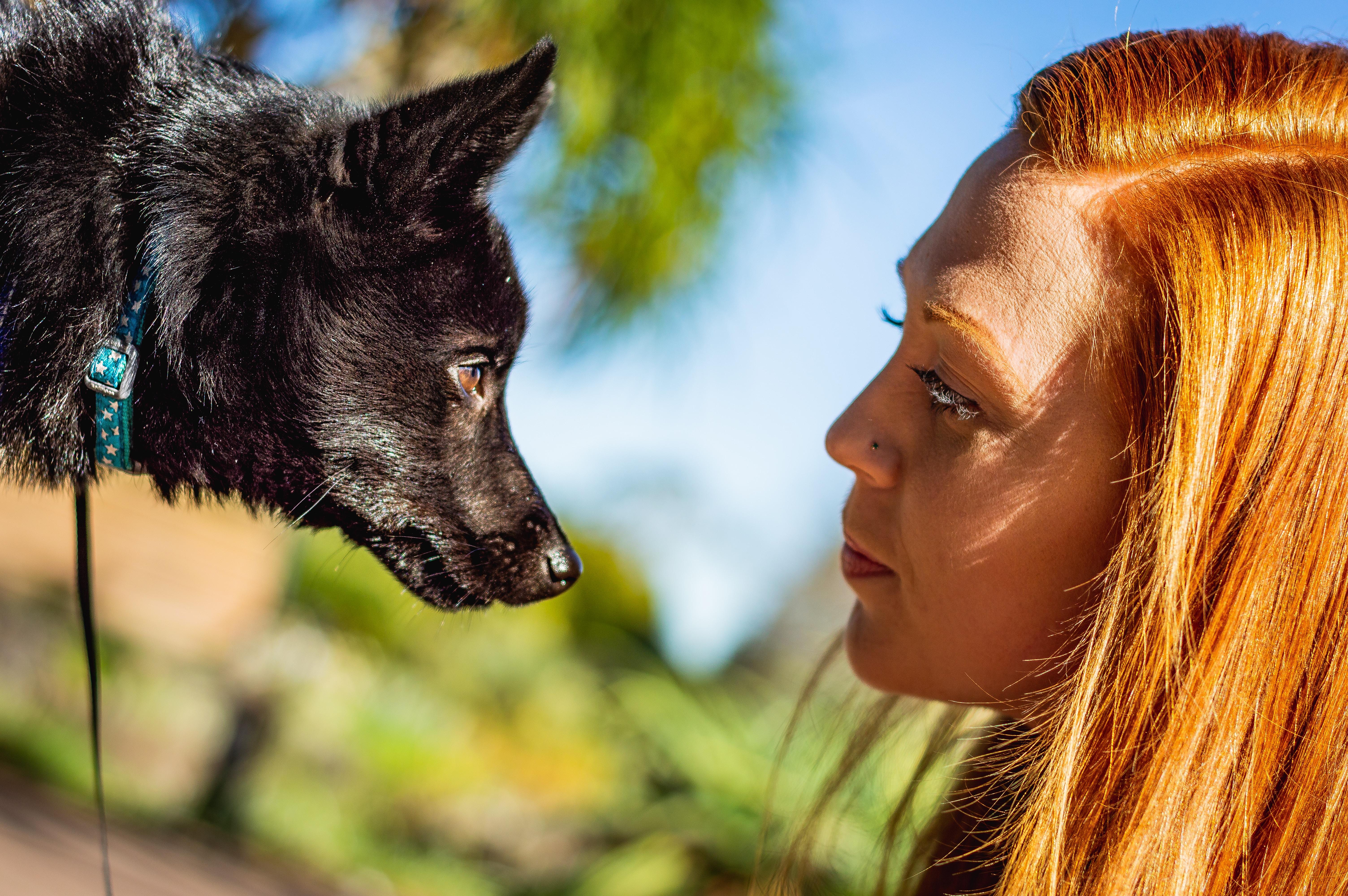 woman looking at short-coated dog