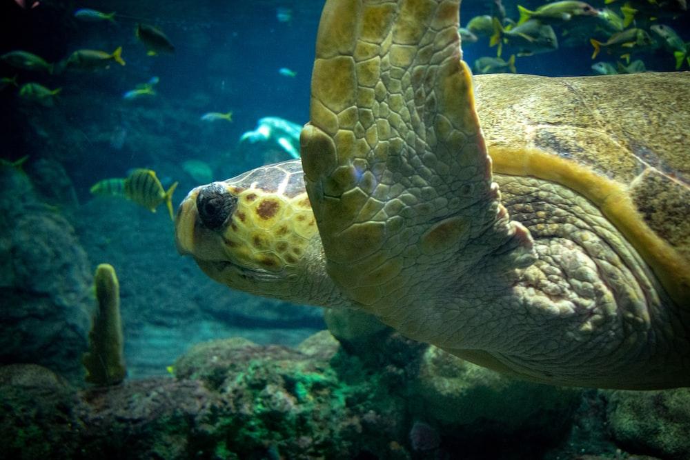 sea turtle swim under water