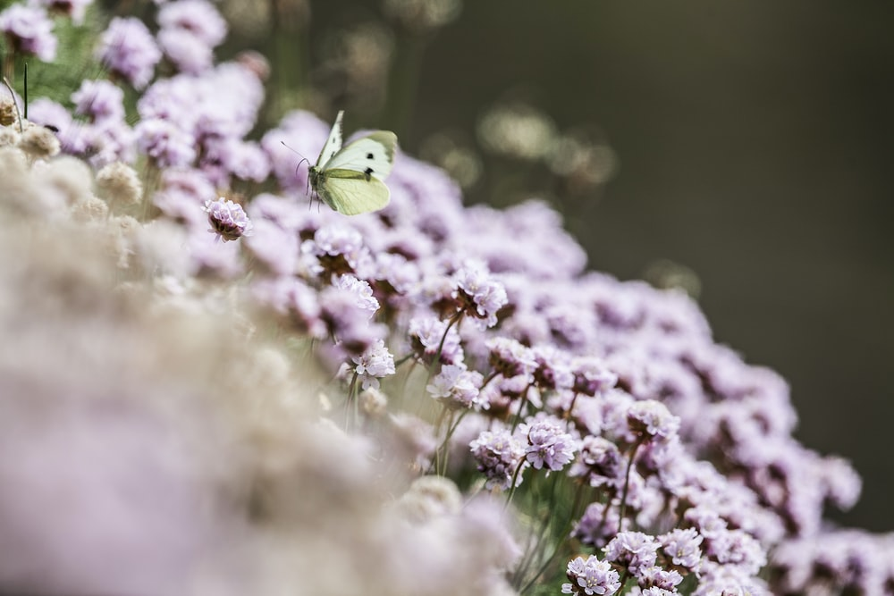 photo of butterfly over pink flowers