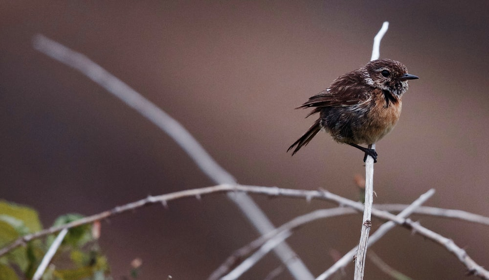 brown bird perching on tree branch