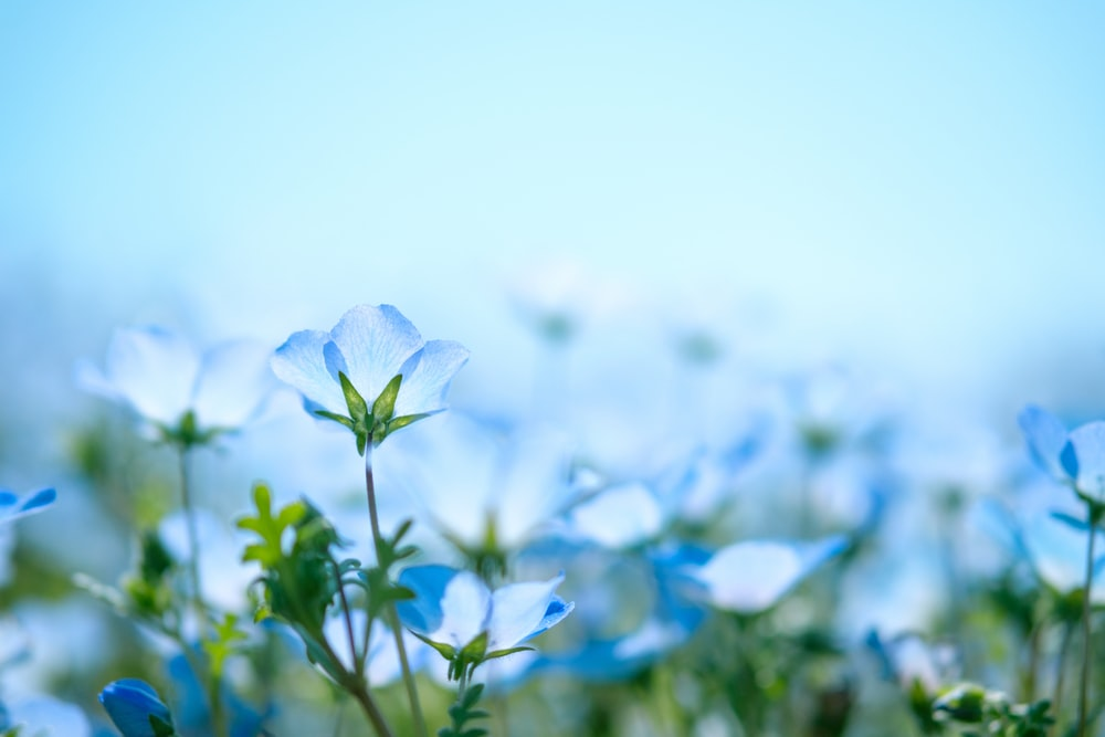 closeup photography of blue petaled flowers on bloom
