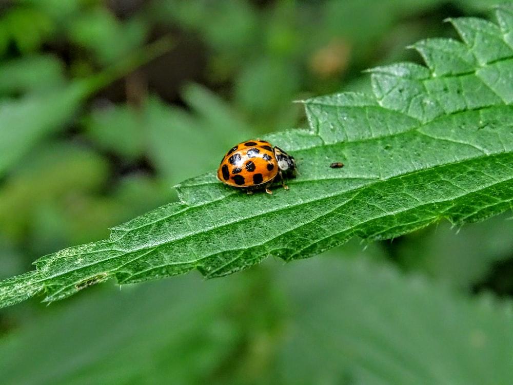 orange and black bug on green leaf