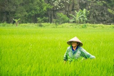 woman wearing conical hat walking toward rice field farmhouse zoom background