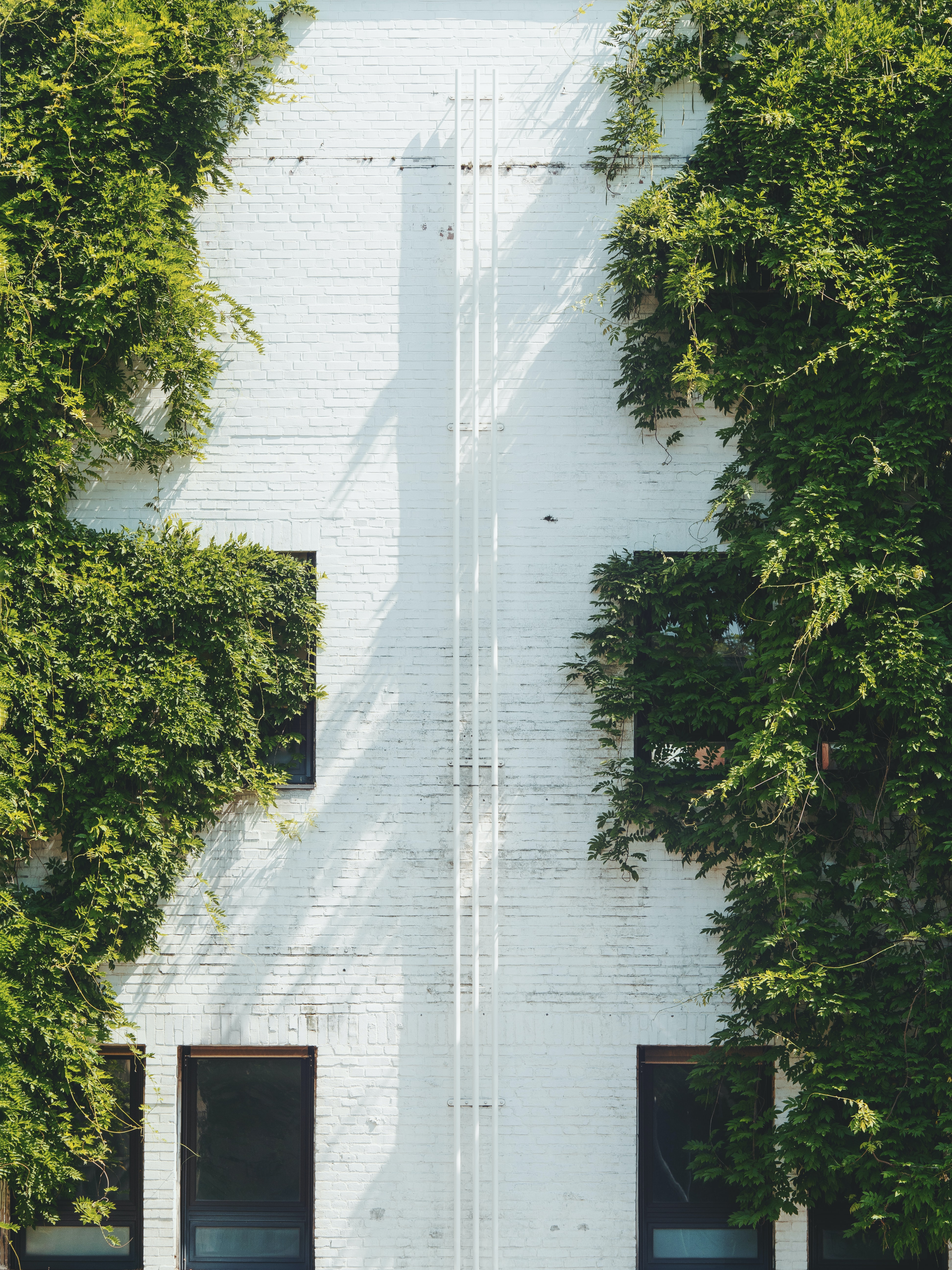 white house near green leafed trees