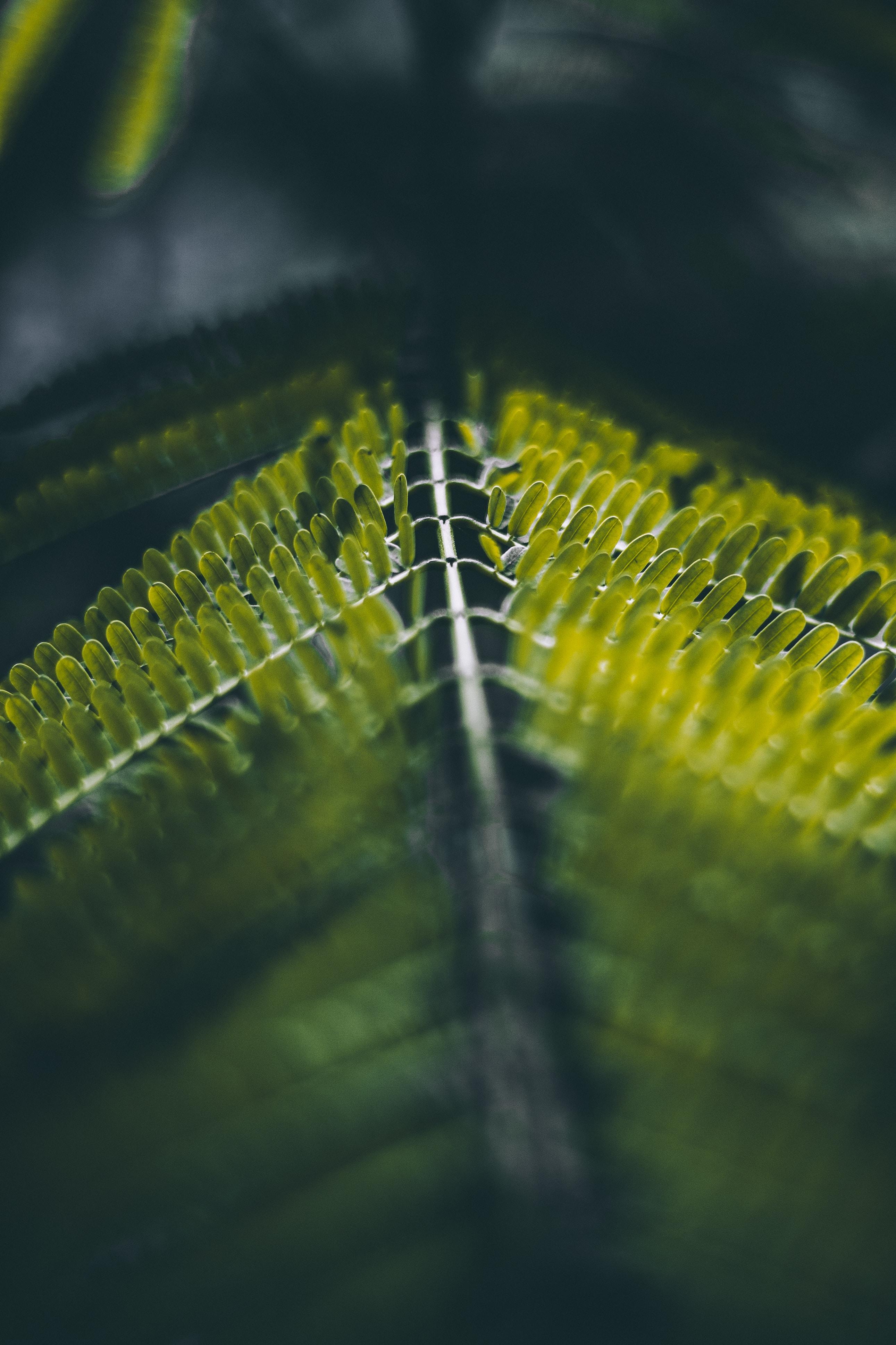 green leaves in closeup shot