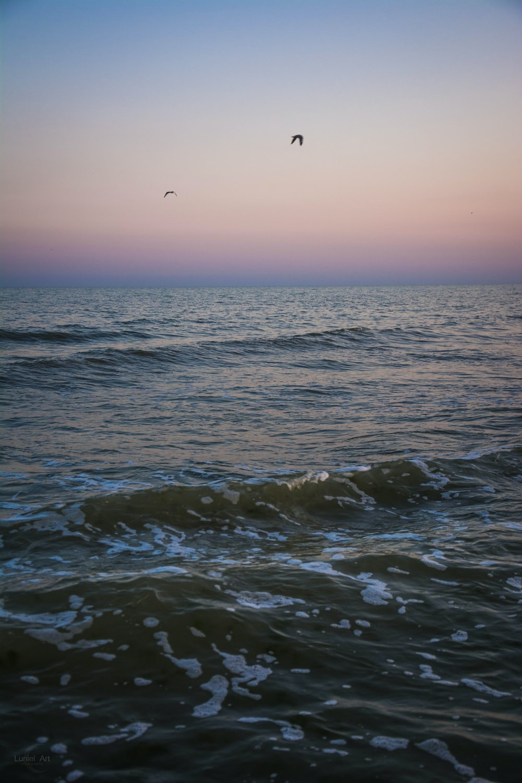 body of water under birds flying