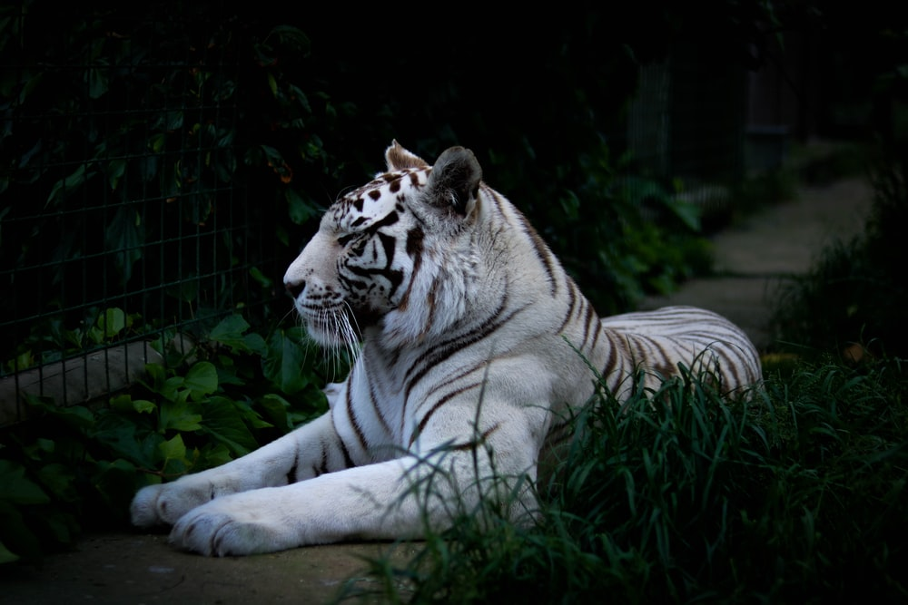 100 Big Cat Pictures Hd Download Free Images Stock Photos On Unsplash