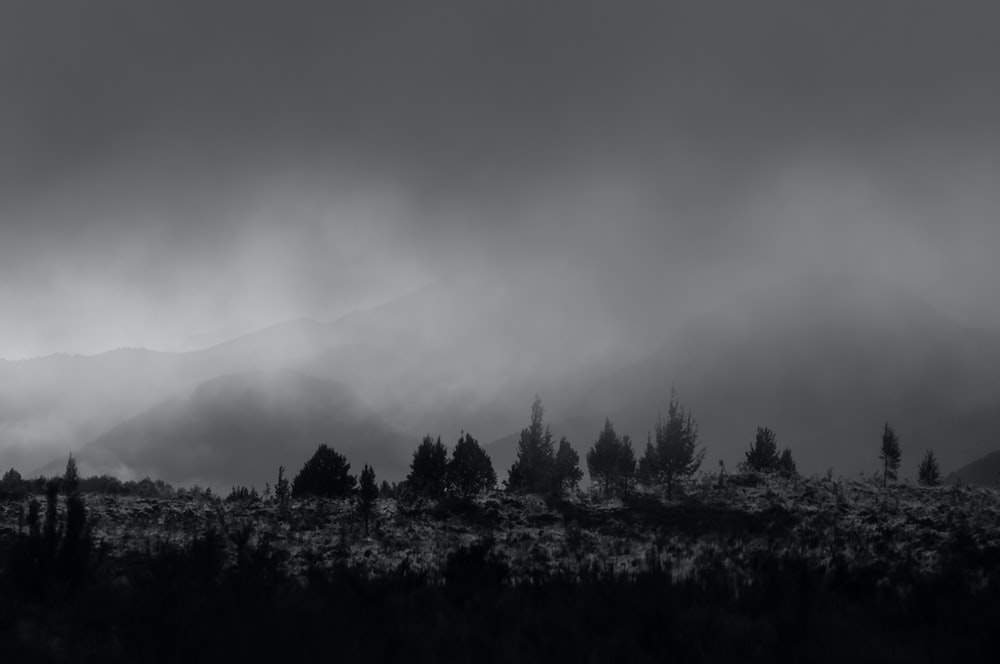 grayscale photography of forest under cloudy skies