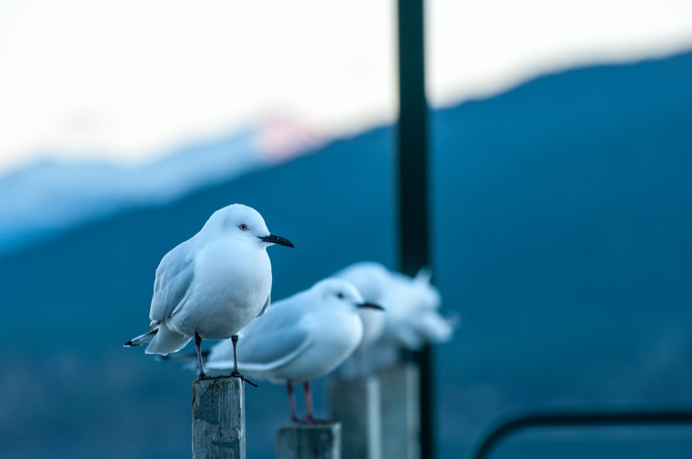 two birds standing on wooden stands