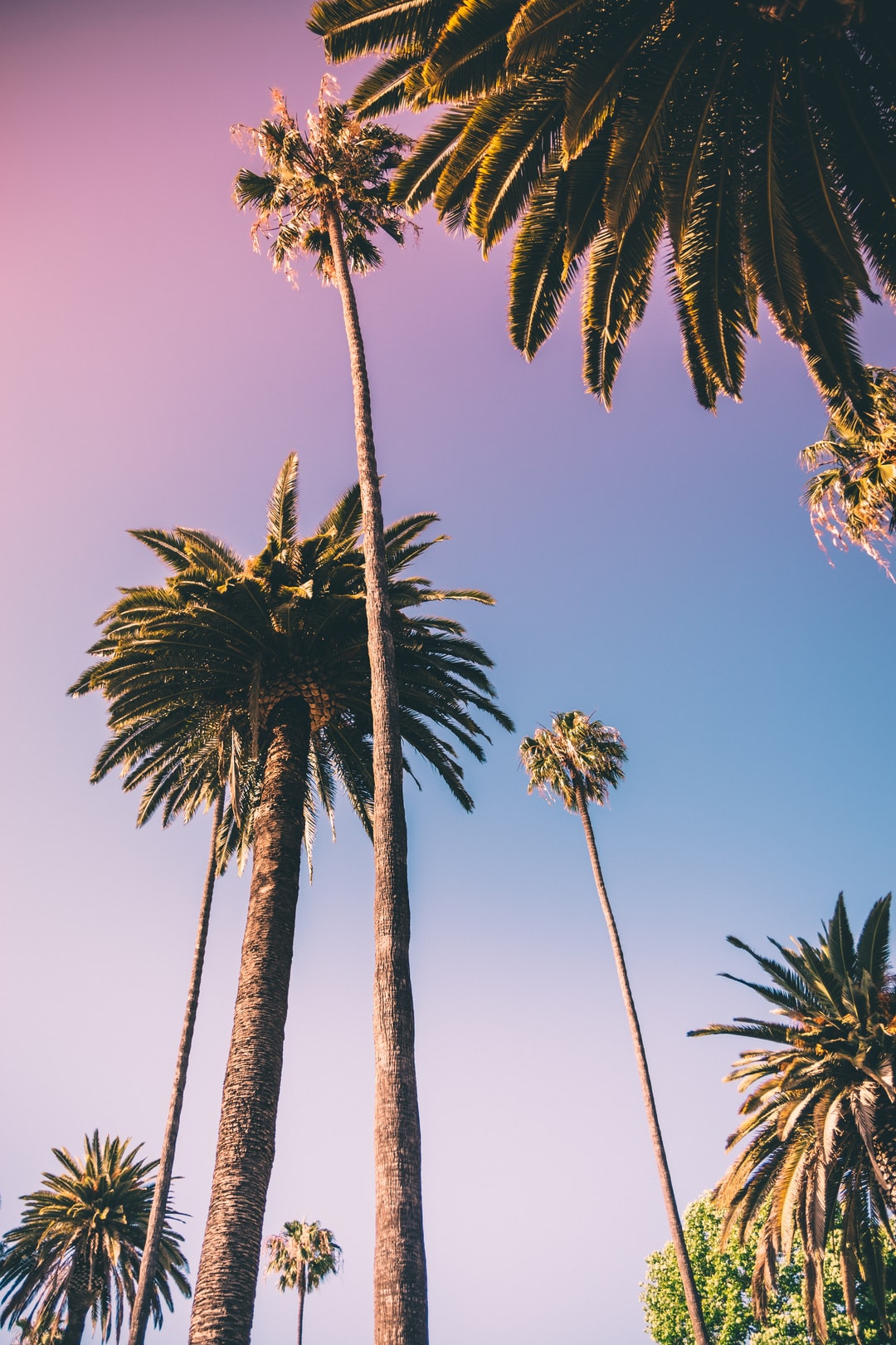 20+ Palm Tree Pictures [HD]   Download Free Images on Unsplash