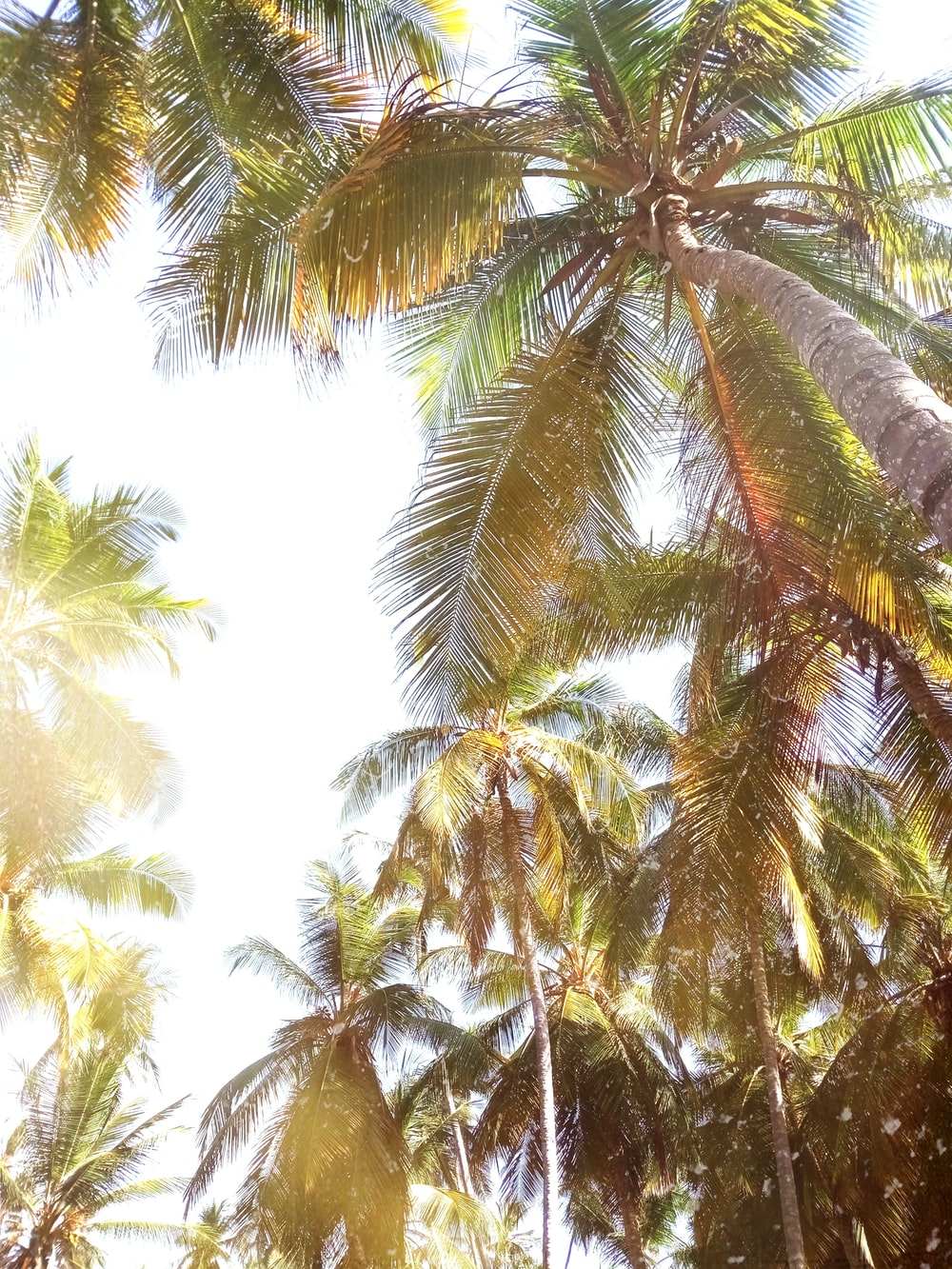 low angle of coconut trees