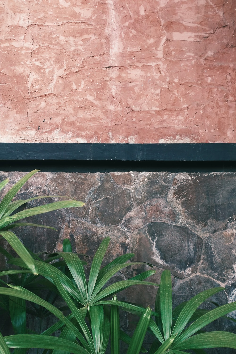 green plant on wall