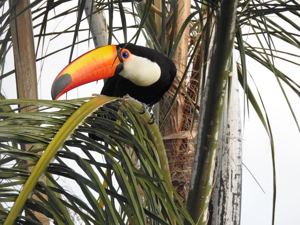photo of toucan bird