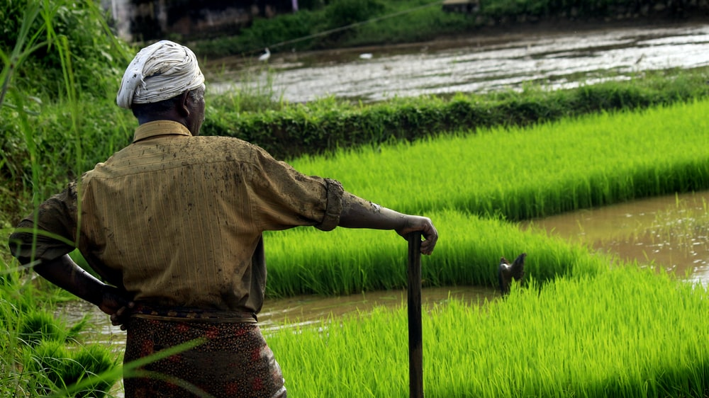 photo of man standing on rice field