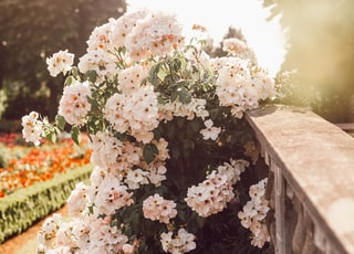 white flowers beside a gray concrete ledge