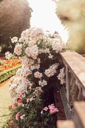 3950. Virágok