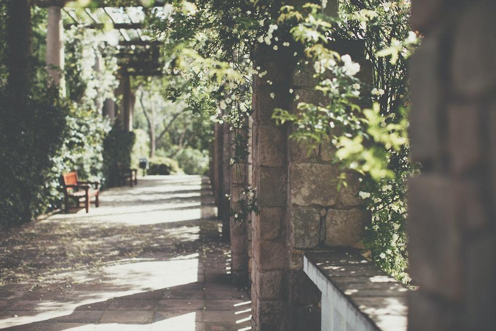 brown bench beside green leaf plant