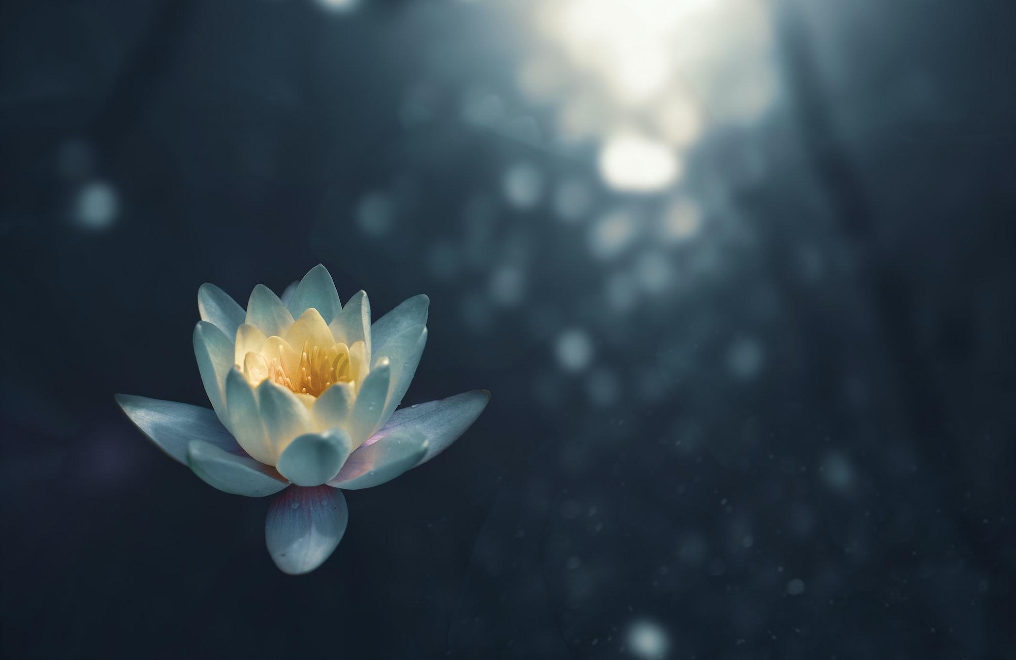 Meditation Beginners' Course: Part 1