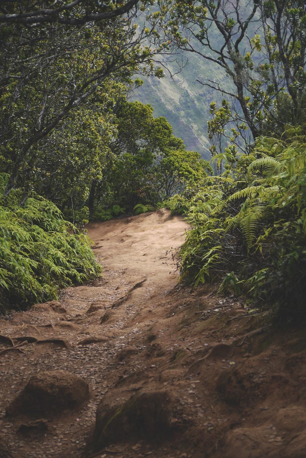 pathway through mountain woods