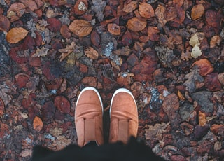 person standing on brown dried leaves