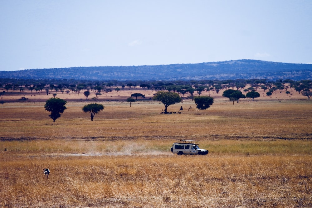 white vehicle travelling on withered grass field during daytime