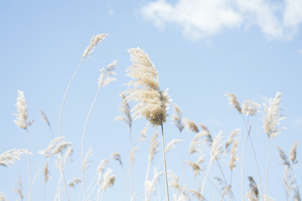 white grains during daytime