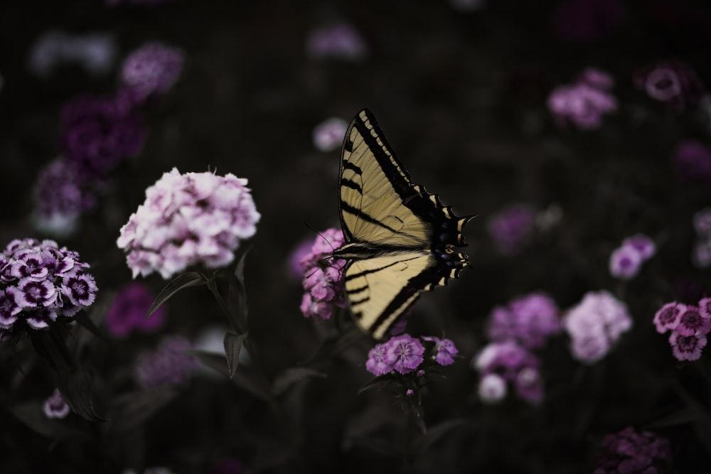 monarch butterfly on pink petaled flower