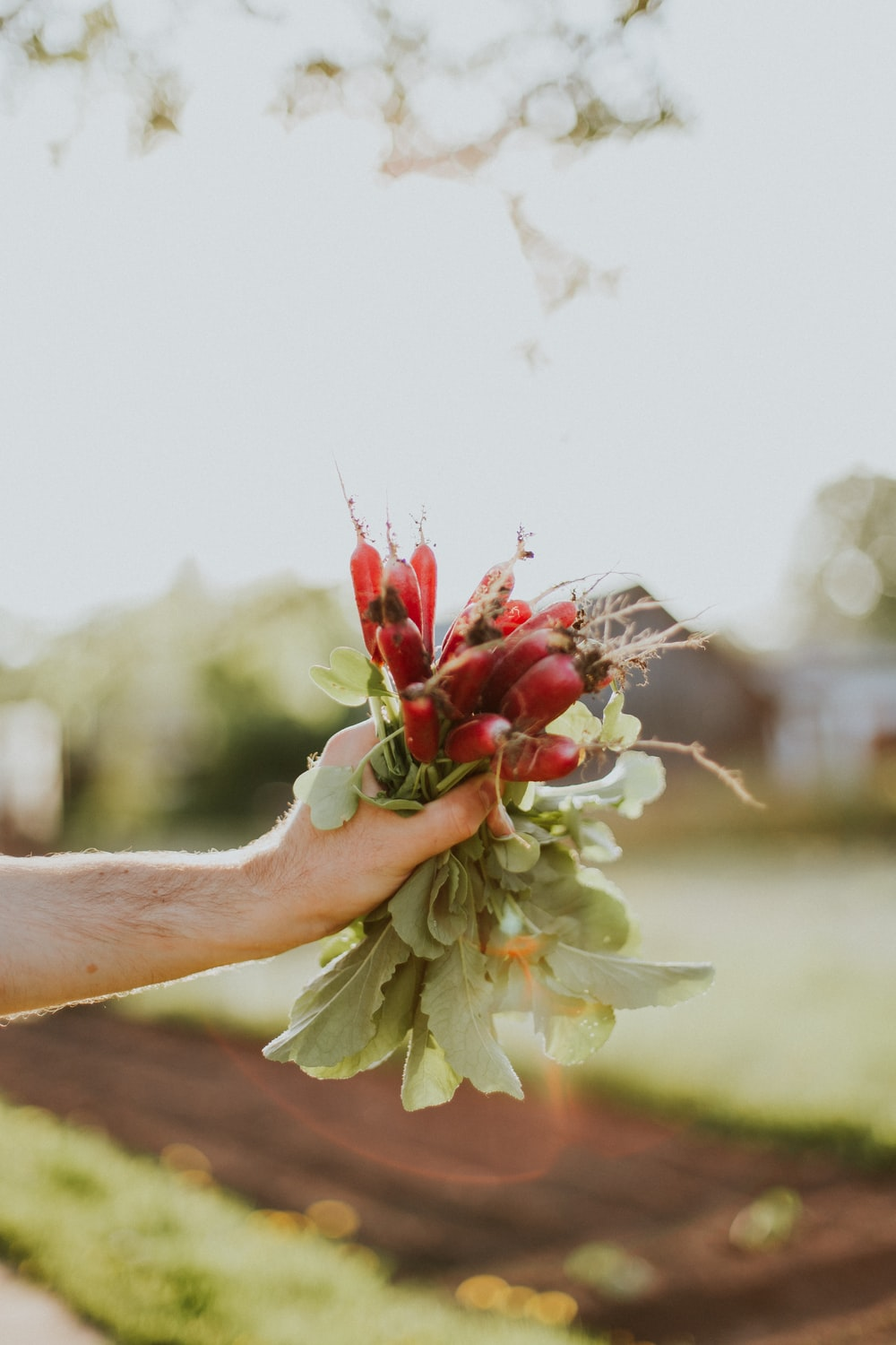 person holding leafed flowers