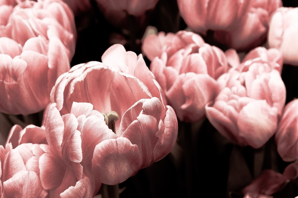 Pink flower nature and pink flower hd photo by nicole king pink flowers field mightylinksfo