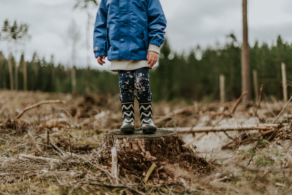 child standing on top of chopped tree