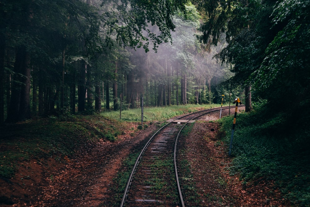 train railway between forest