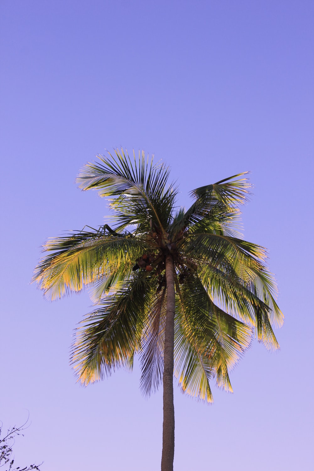 coconut palm tree under blue sky at daytime