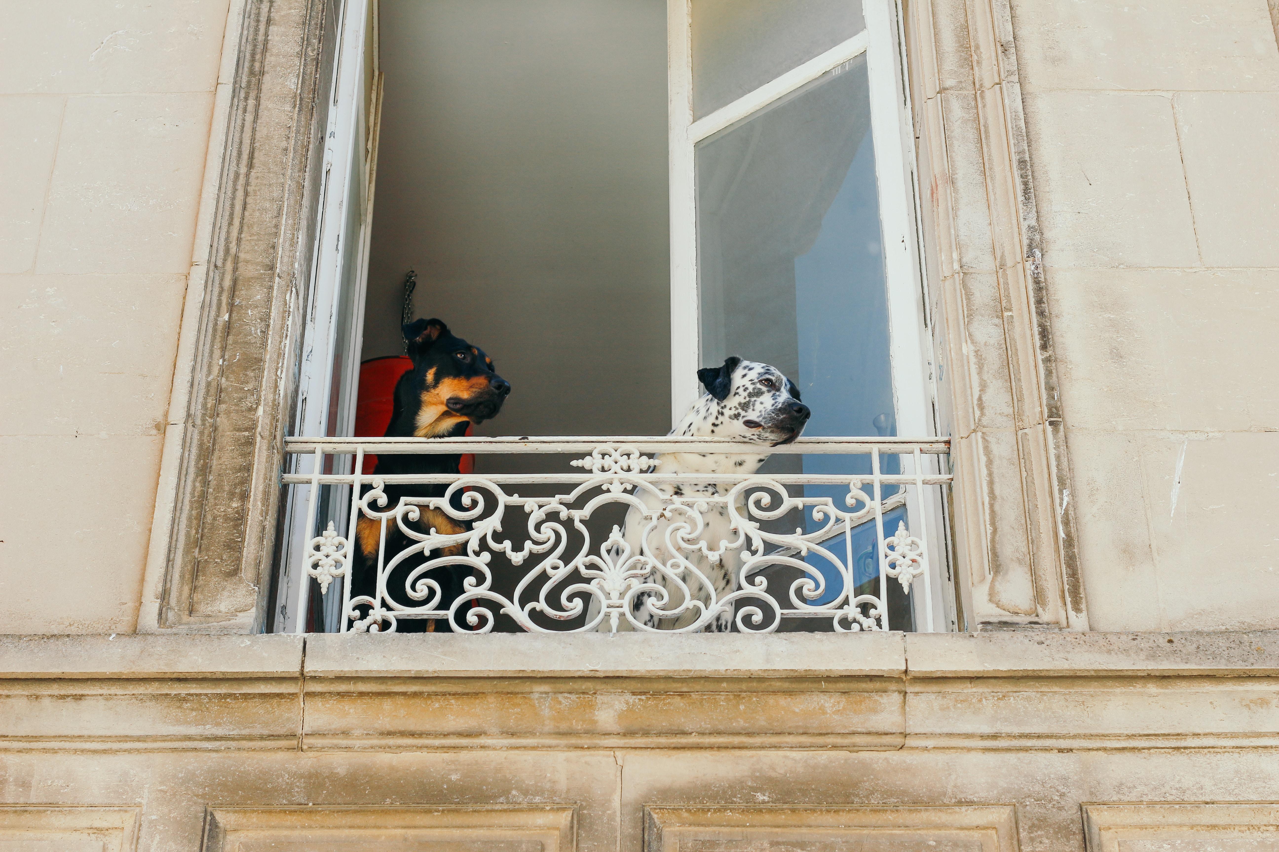 photo of two dogs near window