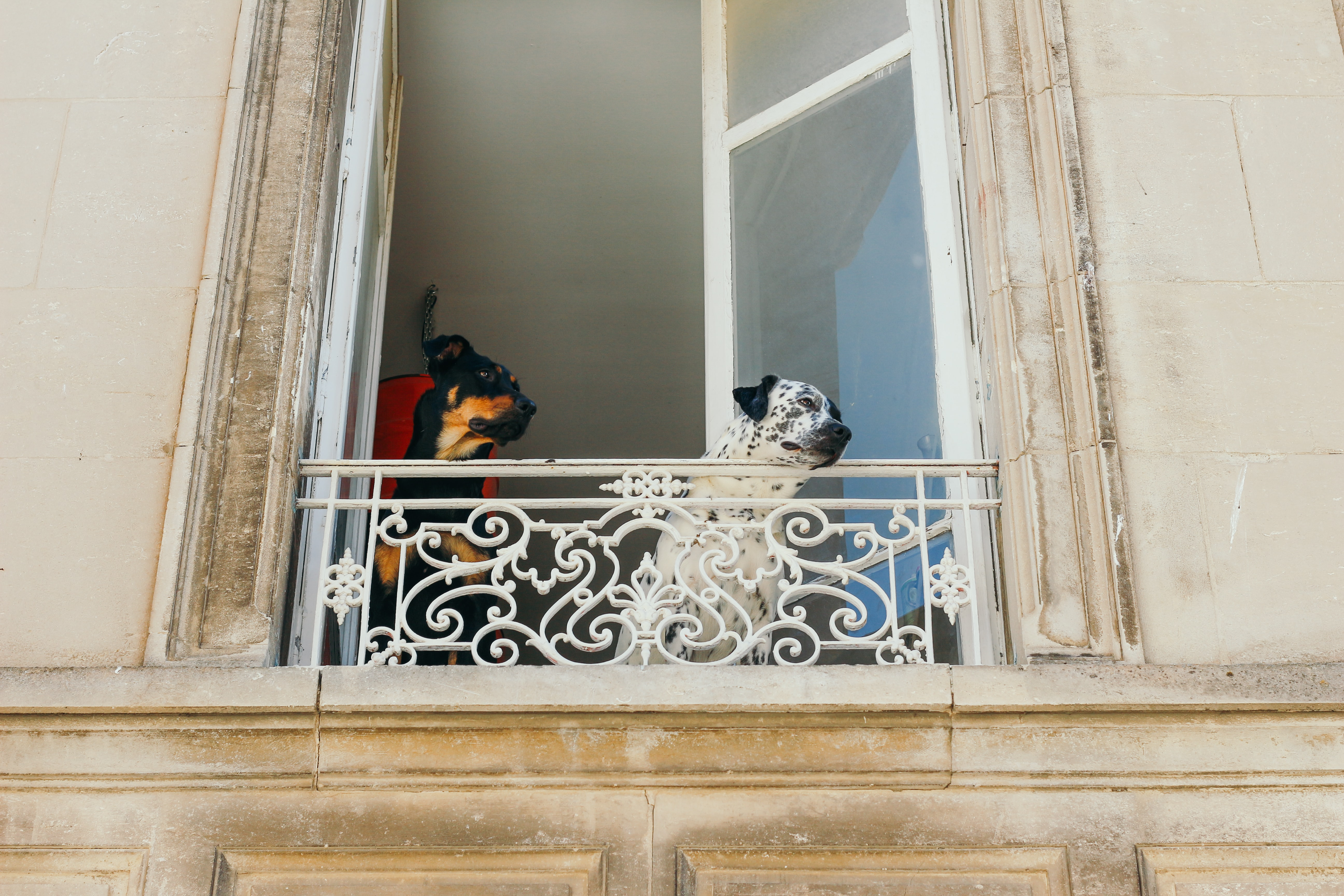 photo of two dogs near window