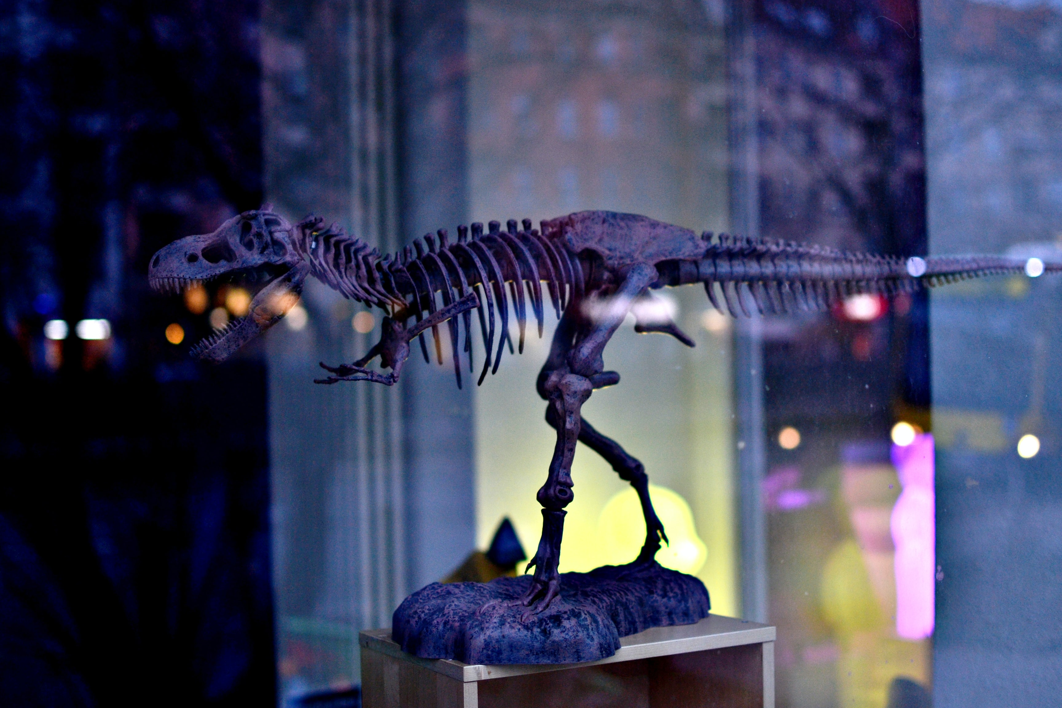 gray dinosaur skeleton figurine