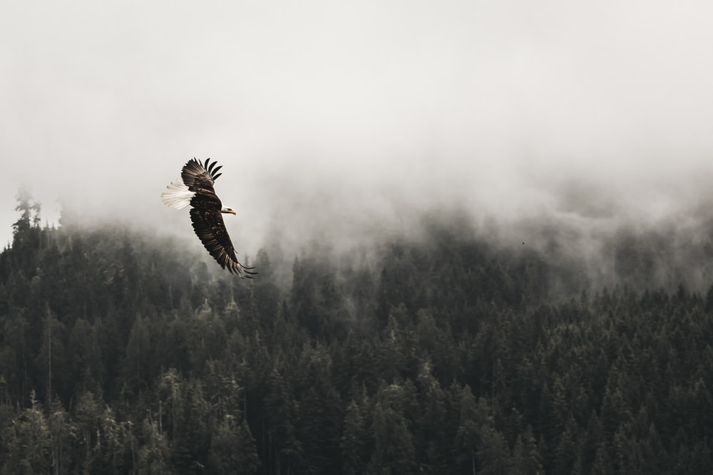 bald eagle flying under forest during daytime