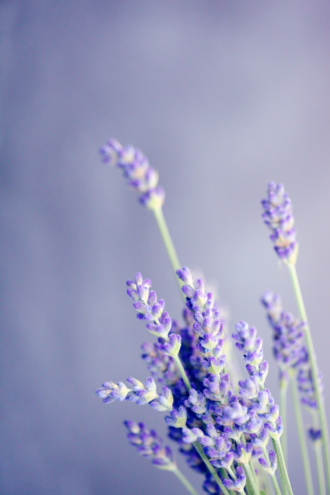 Some fresh lavender buds that grow wild in my yard. I love the soothing soft purple hues.