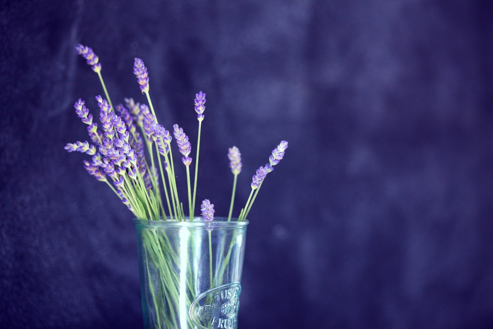 closeup photo of purple petaled flowers in glass
