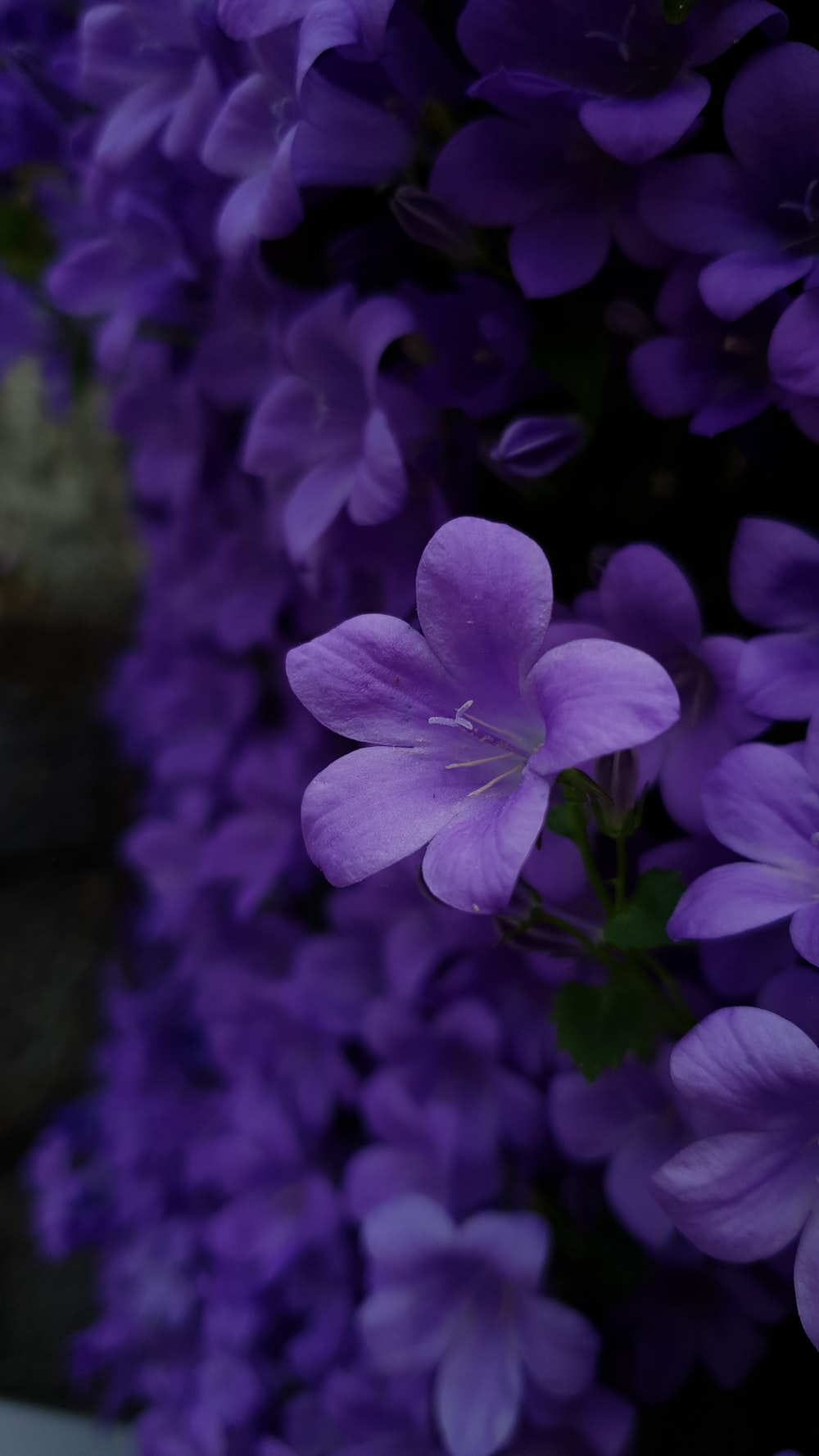 photo of purple petaled flowers