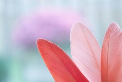 closeup photo of pink petaled leaf