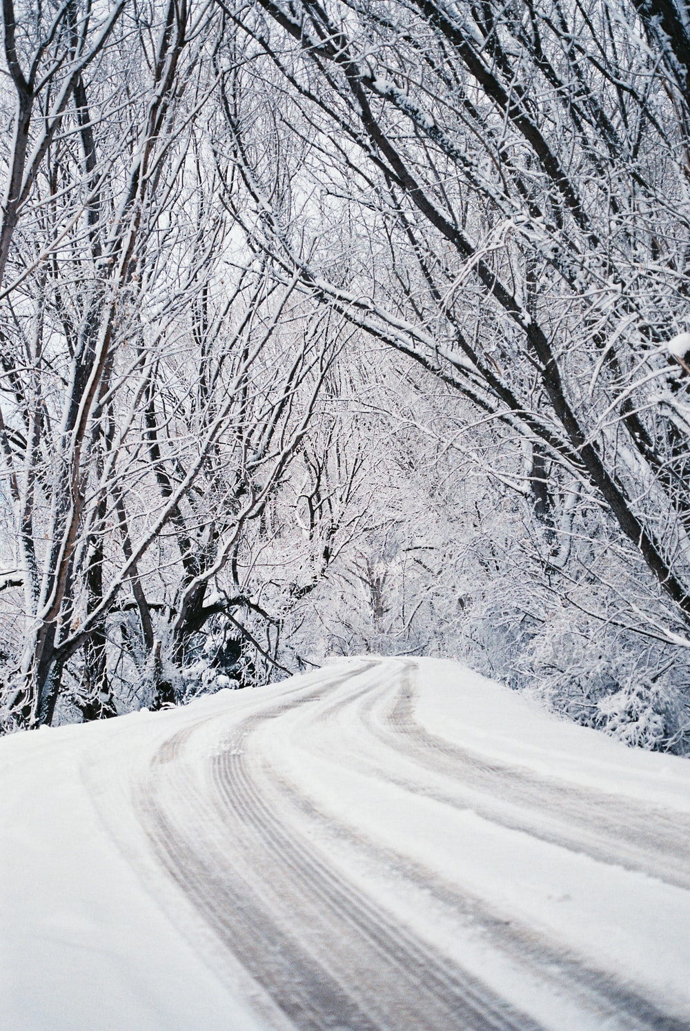 snow covered road between trees